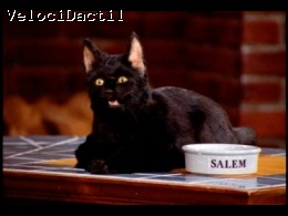My Racers